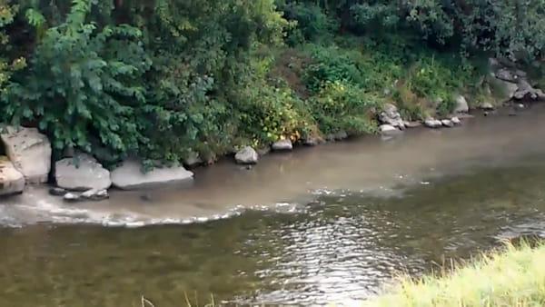 Guasto al depuratore, un'onda marrone di liquami fognari si riversa nel fiume