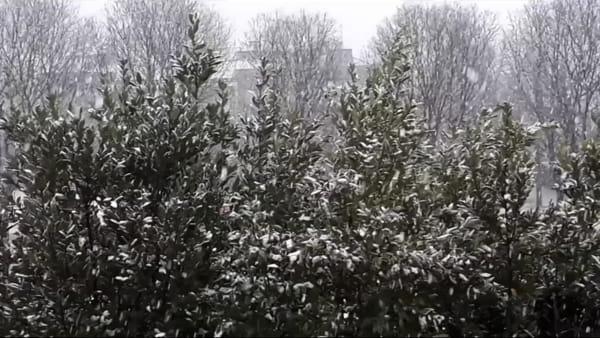 La neve è arrivata, anche in pianura: prati e tetti imbiancati