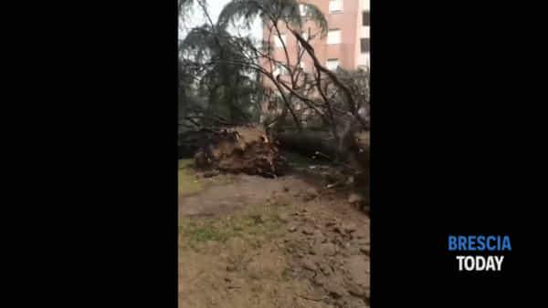 La terribile potenza del vento: sradicati alberi alti decine di metri