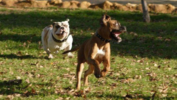 Castenedolo: Corsi di addestramento per cani