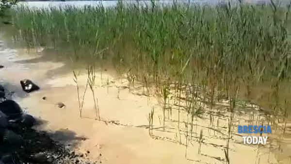 Lago di Garda, l'acqua si tinge di giallo: la spiegazione del fenomeno